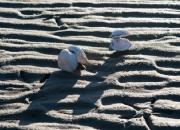 1. `Modlys`: Strandede Muslinger af Alex T. Skytte