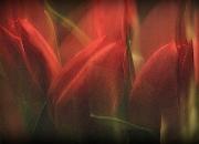1. `Rødt`: `Tulipaner`af Mette Müller