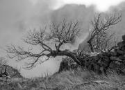Februar: `Brændte træer, Madeira`af Åse Kristensen
