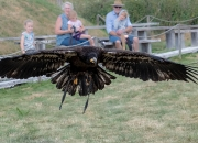 Stor fugl