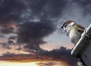 Lille fugl i aftensol